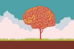 انعطاف پذیری عصبی یا نوروپلاستیسیتی