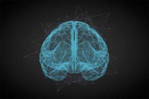 مدل مغز کلی هرمان