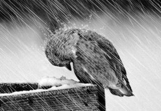 نظریه های روانشناسی افسردگی